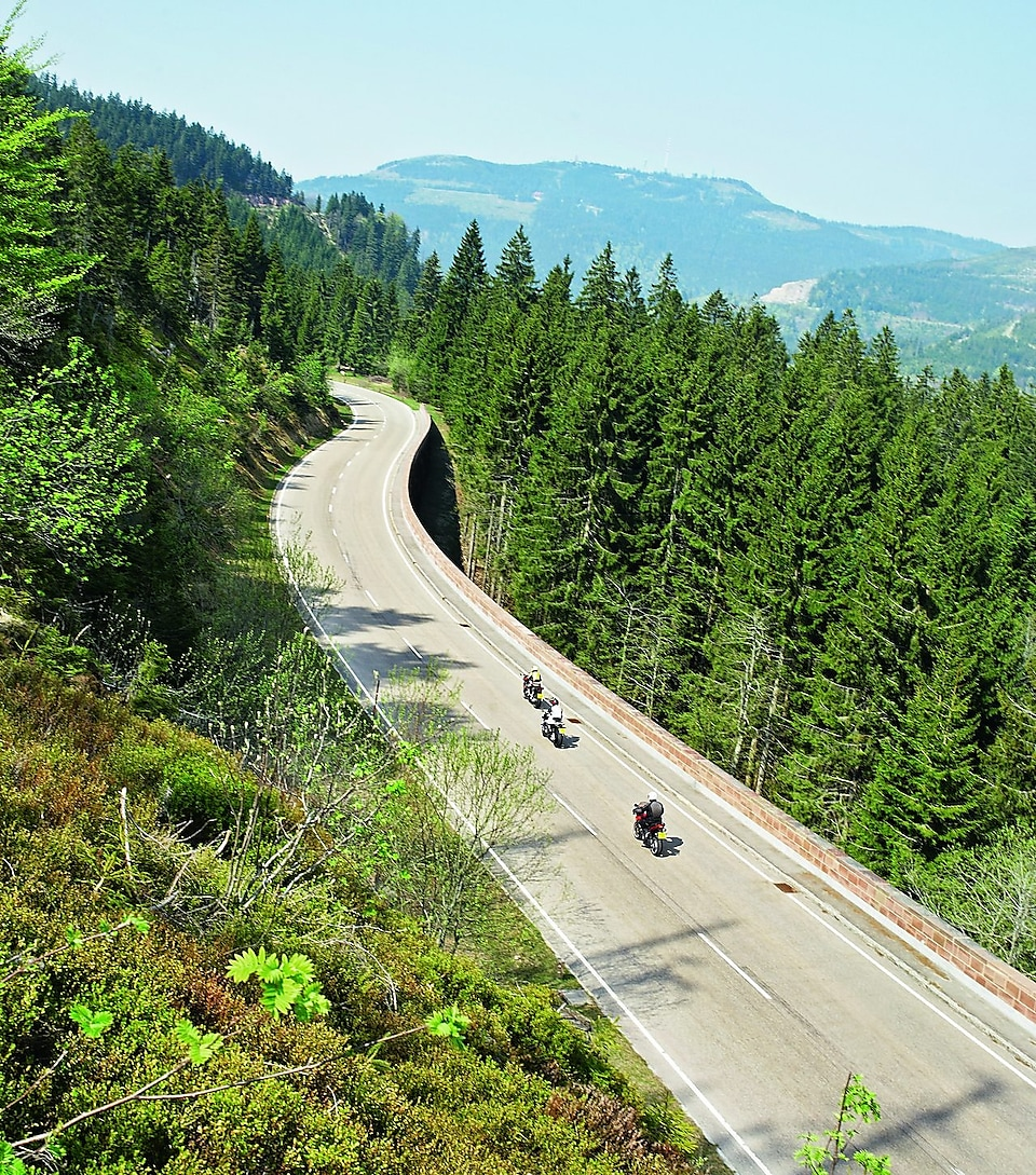 Three motorbikes racing along a tree lined mountain road
